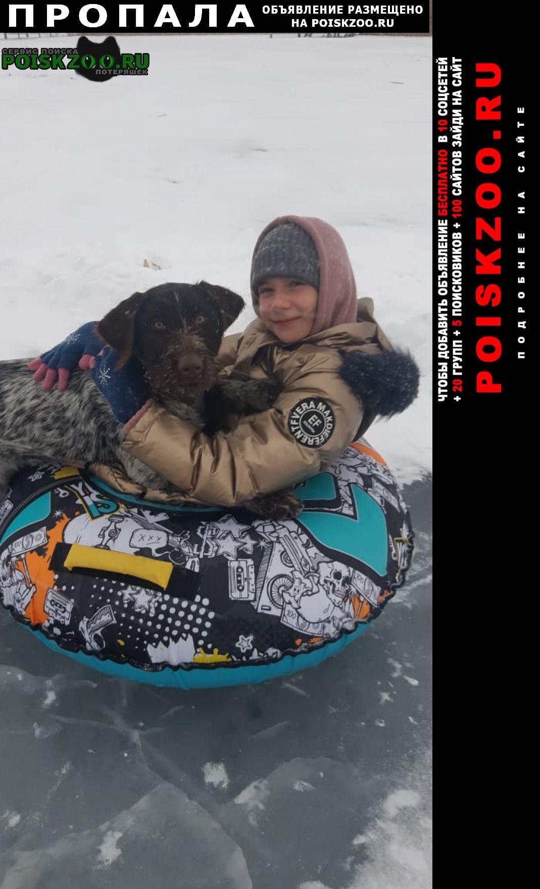 Пропала собака девочка. порода дратхаар Красный Сулин