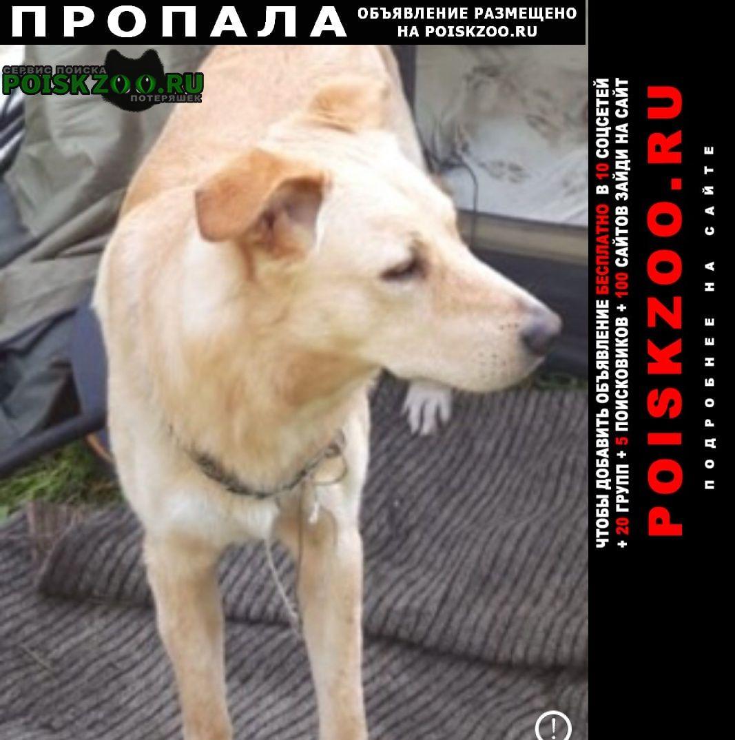Пропала собака кобель был замечен с женщиной в люберцах. Люберцы