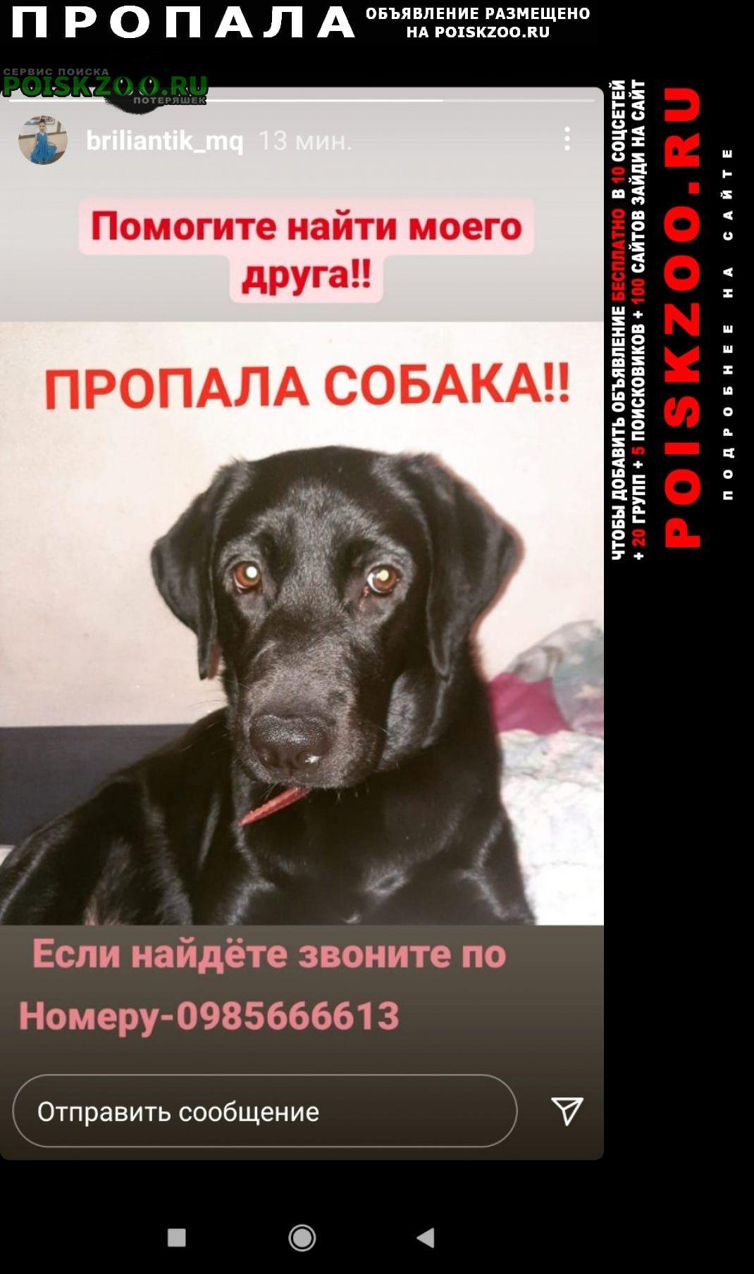 Мариуполь Пропала собака черный лабрадор