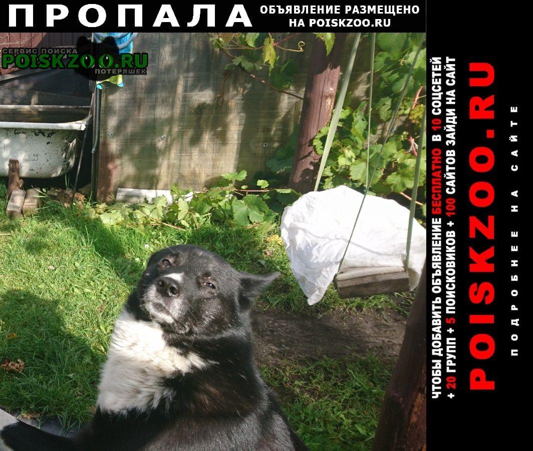 Пропала собака кобель друг семьи Дубна