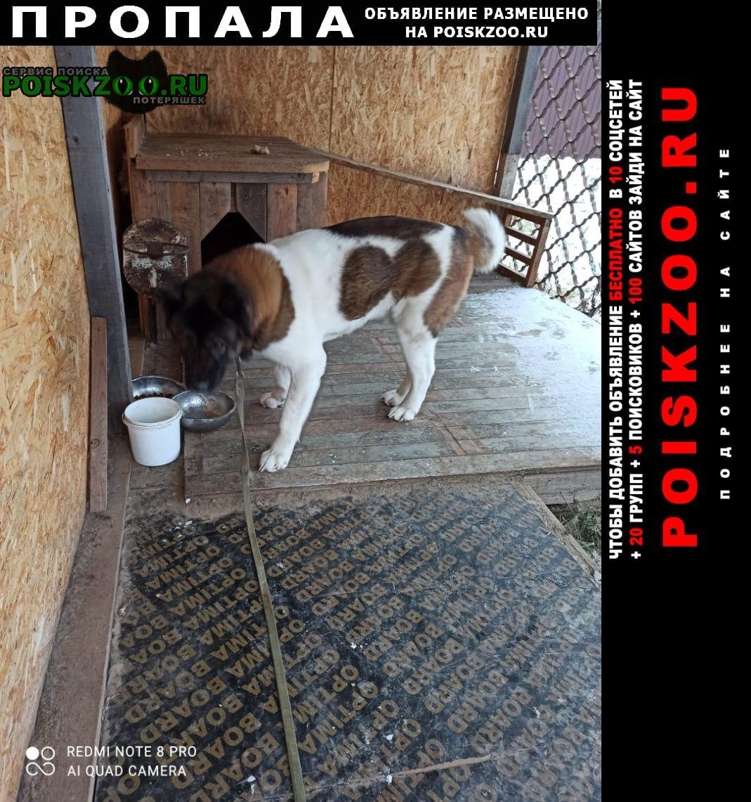 Пропала собака кобель кабель Бронницы