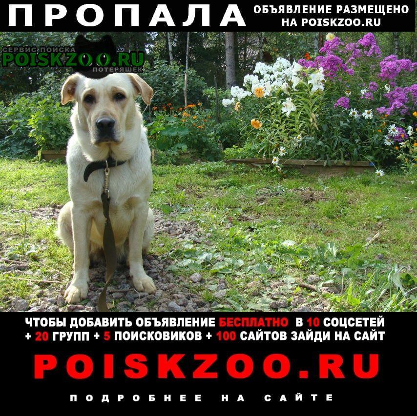 Санкт-Петербург Пропала собака спб пр. металлистов лабр