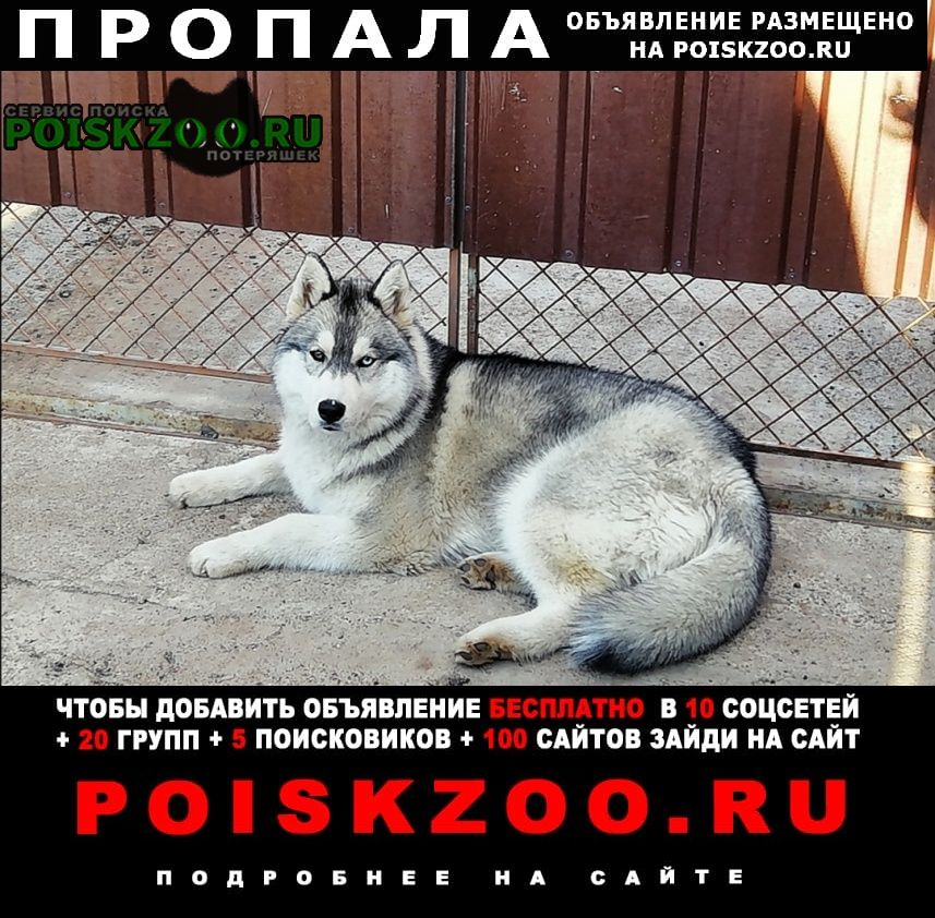 Оренбург Пропала собака