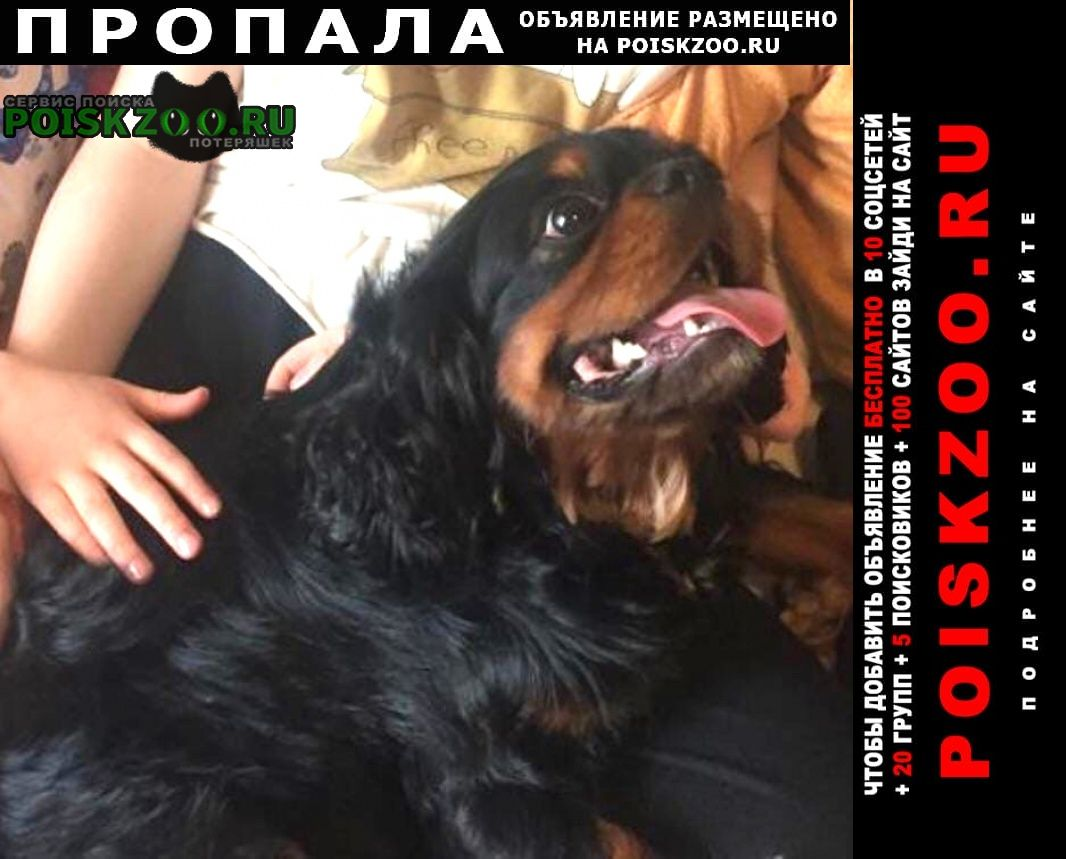 Пропала собака кобель черный с рыжим подпалом спаниель Раменское