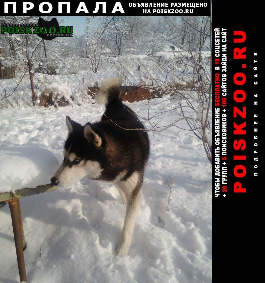 Пропала собака кобель Новопавловск