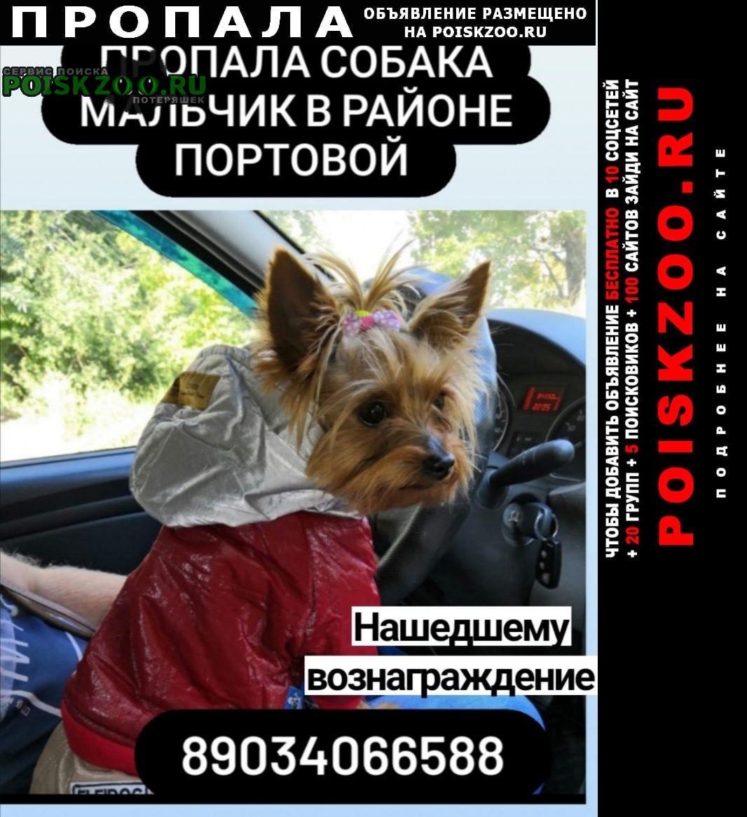 Пропала собака кобель умоляем помогите Ростов-на-Дону