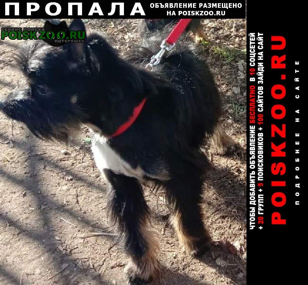 Пропала собака кобель черный Москва