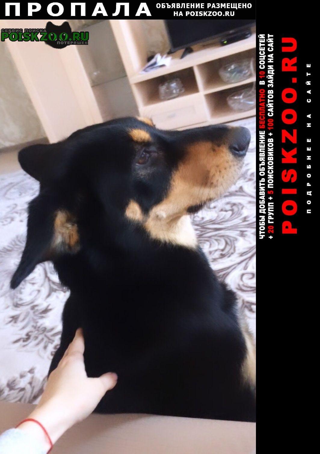 Пропала собака большая Таганрог