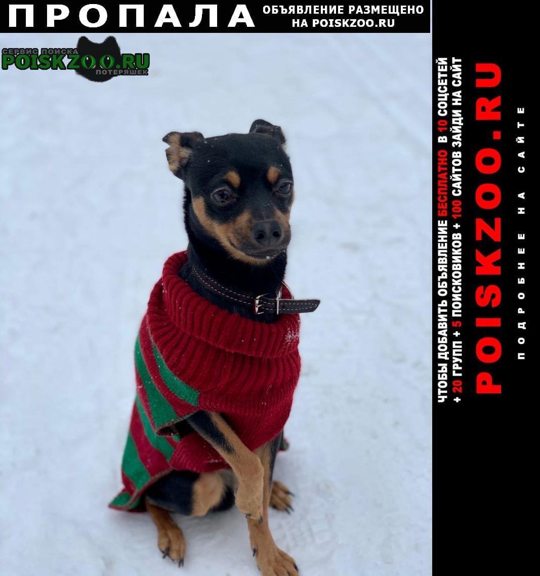 Пропала собака кобель Железнодорожный (Московск.)