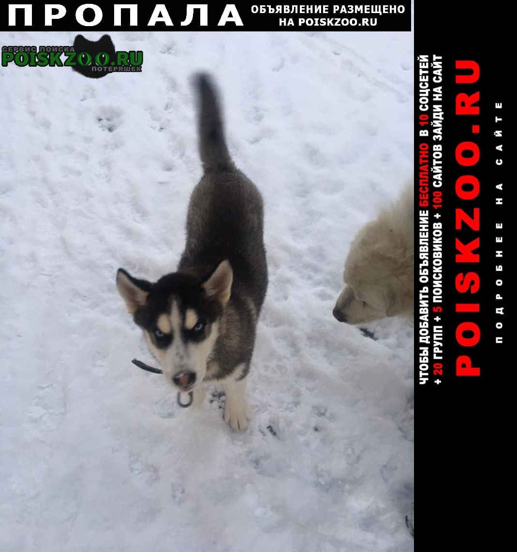 Пропала собака кобель душоново щёлковский район Фряново
