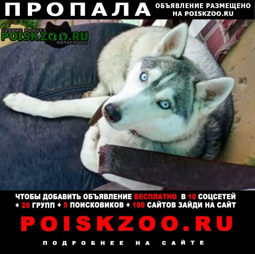 Пропала собака хаски Калуга