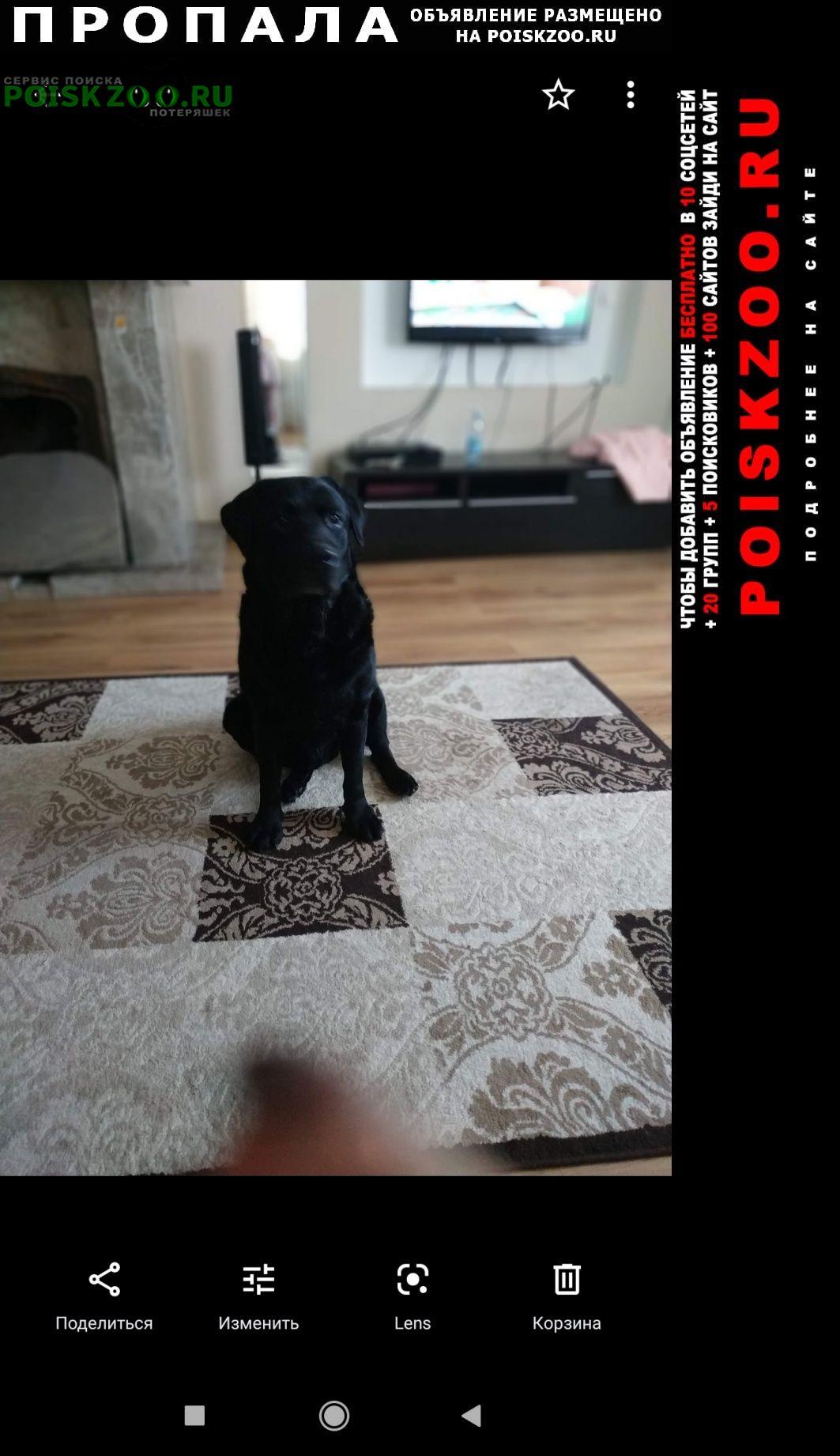 Пропала собака черные лабрадоры, мальчик и девочка Тюмень