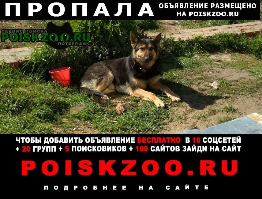 Пропала собака кобель овчарка Кропоткин