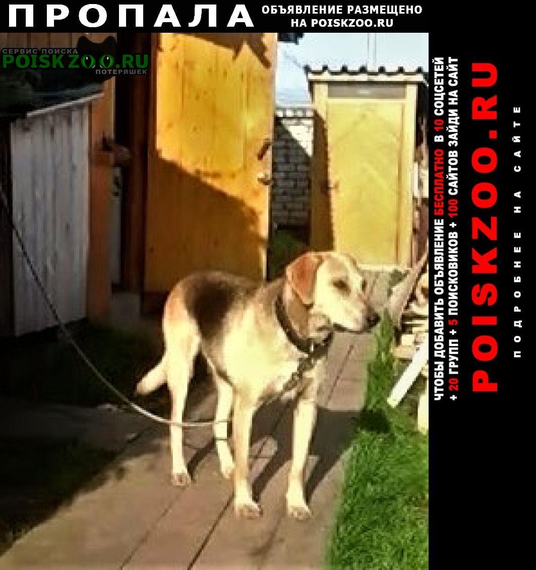 Пермь Пропала собака кобель