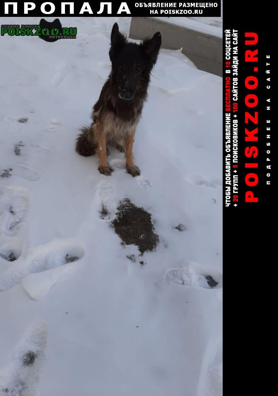 Пропала собака животное нуждается в помощи Бийск