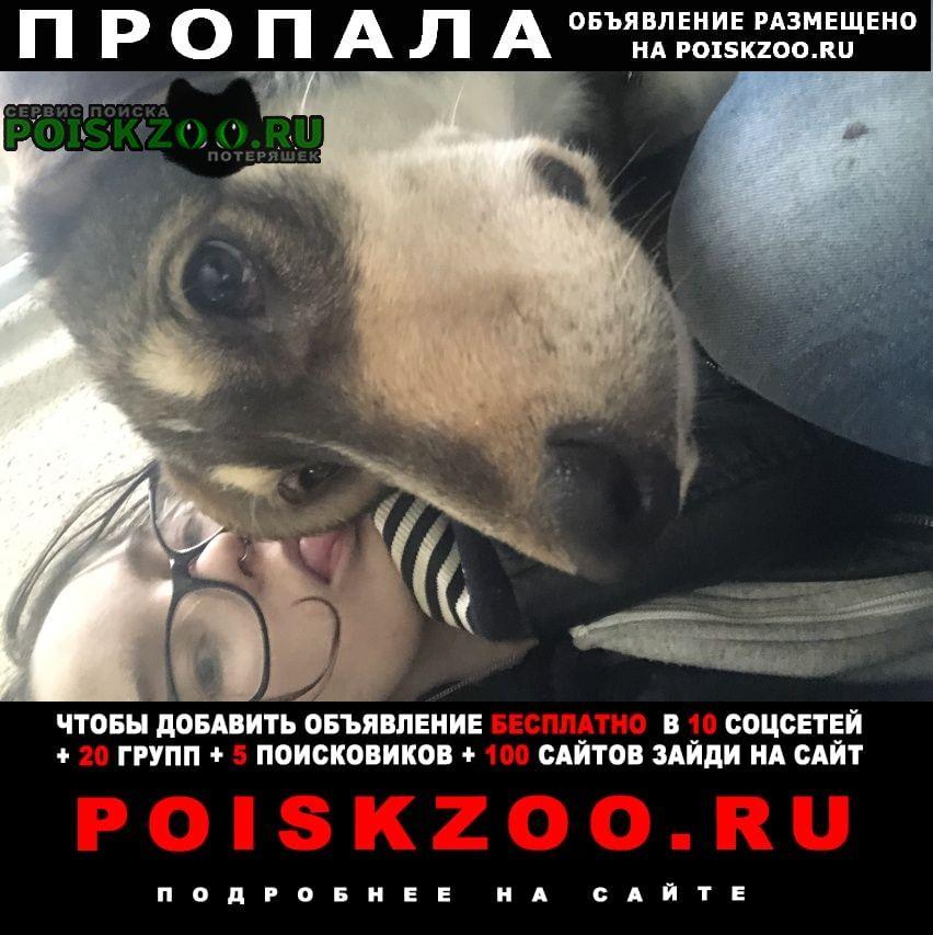Санкт-Петербург Пропала собака кобель шрам на брюшке после операции