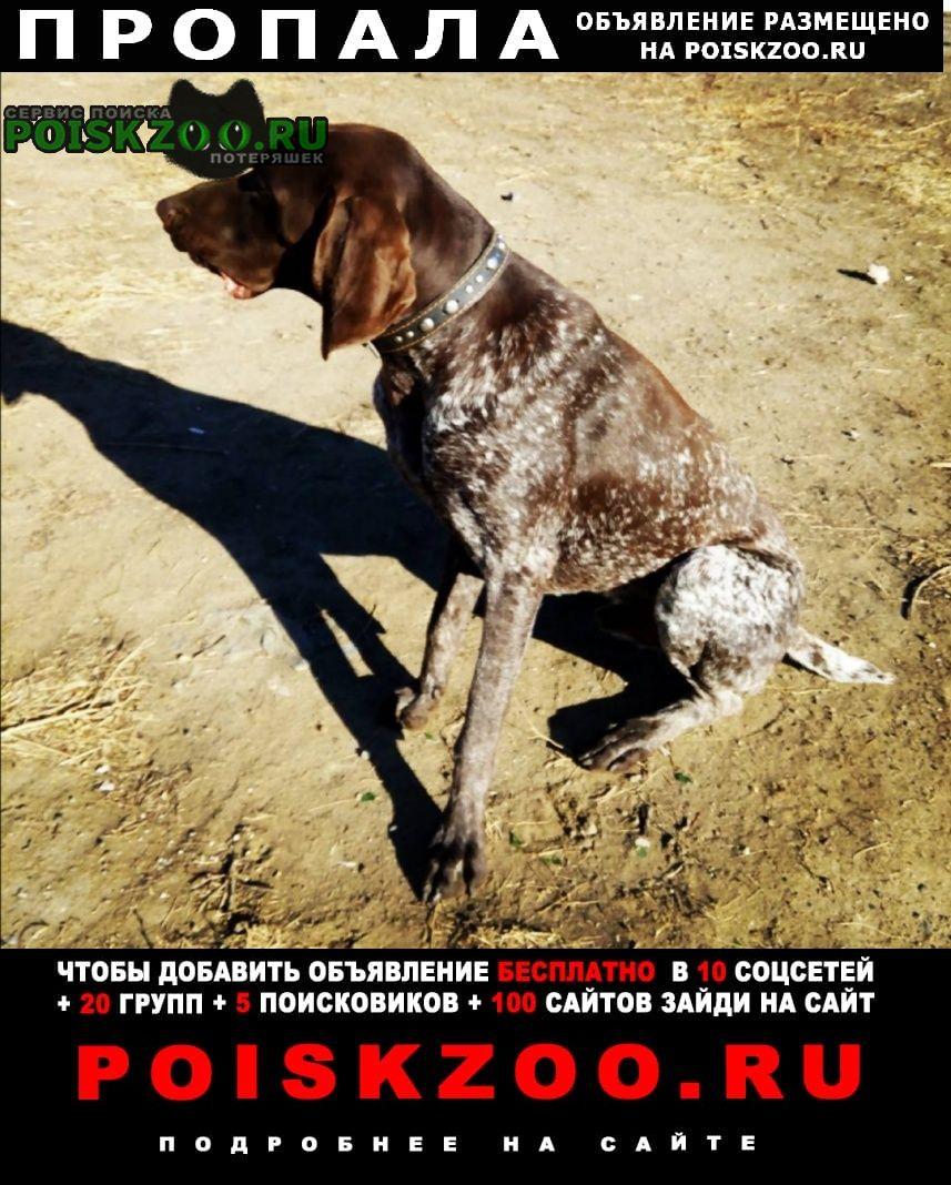 Волгоград Пропала собака кобель курцхаар рей