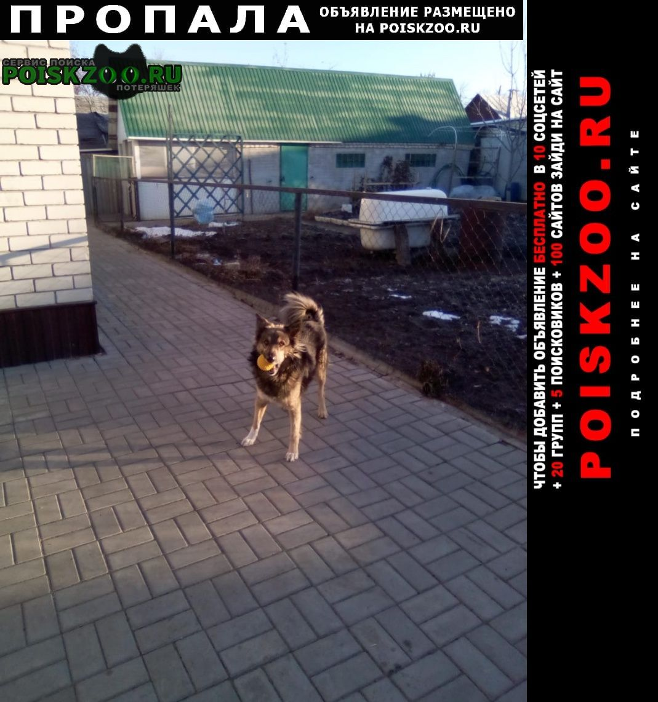Пропала собака кобель кличка рекс Тамбов