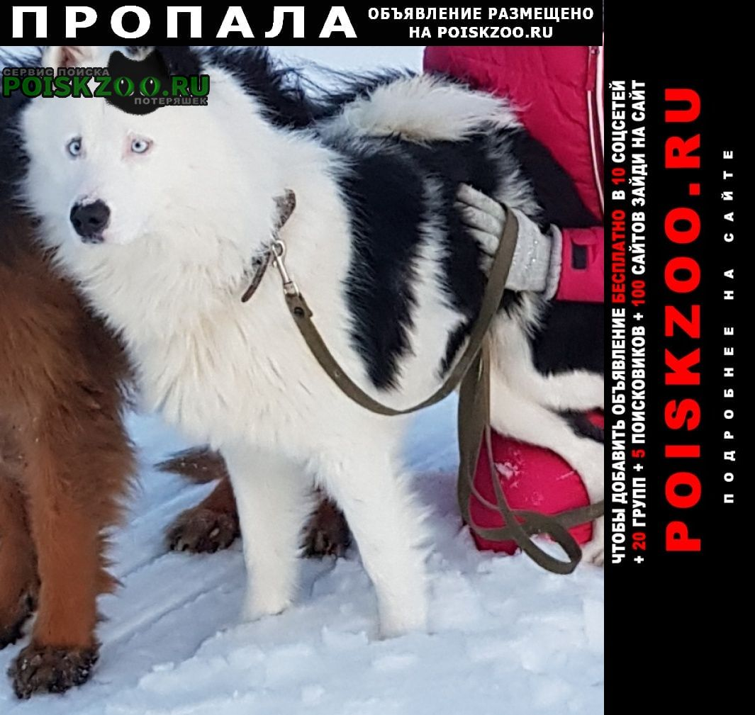 Пропала собака кобель Мурманск