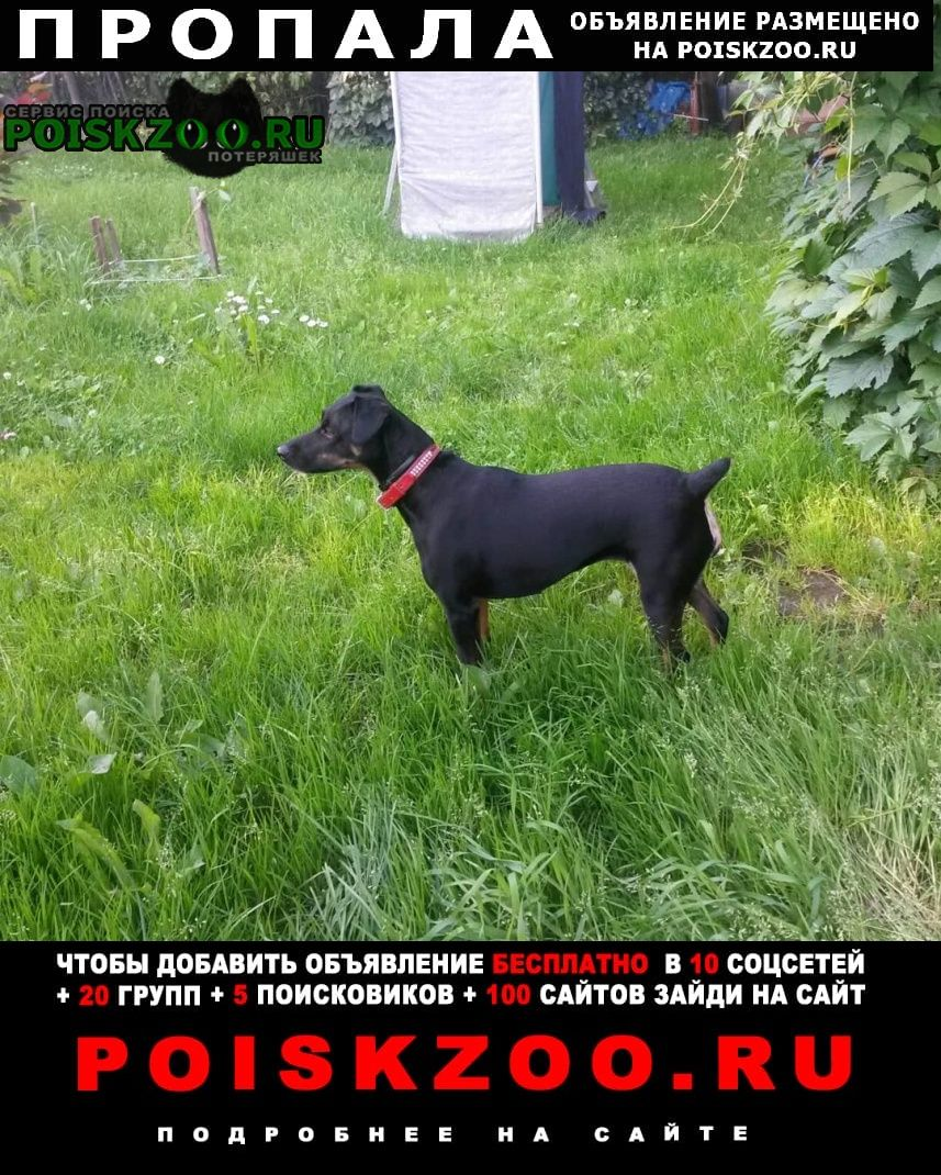 Пропала собака Щелково