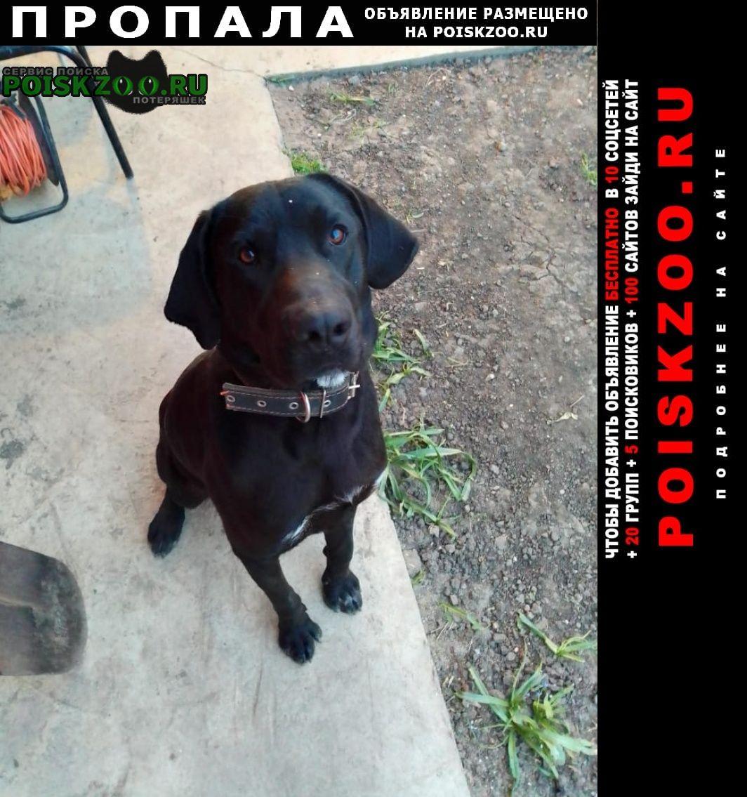 Пропала собака кобель чёрный лабрадор с высокими лапами Краснодар