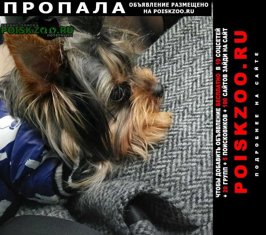 Пропала собака кобель йорк мини Калуга