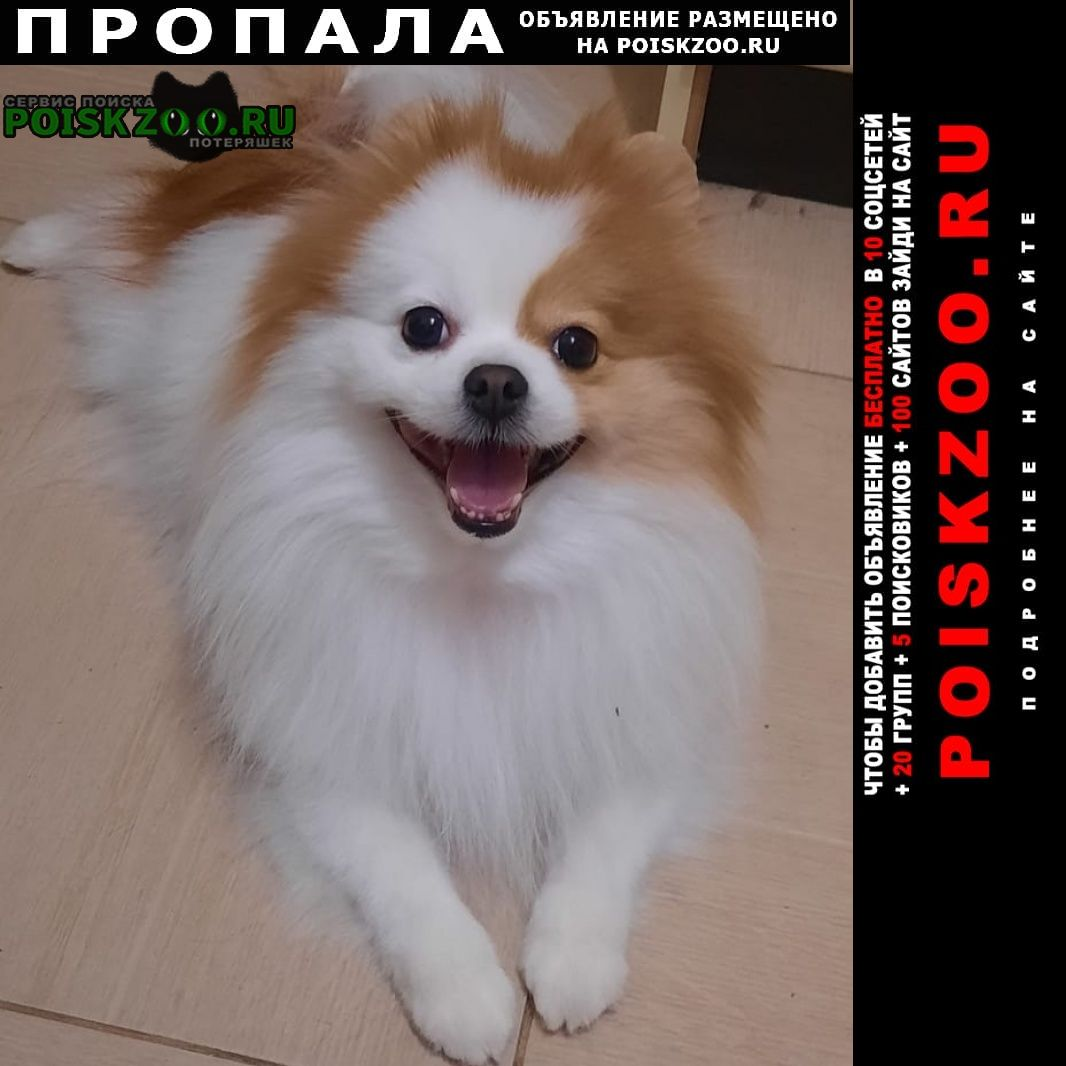 Пропала собака Кимовск