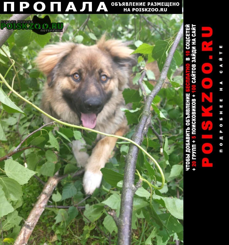 Пропала собака кобель Ногинск