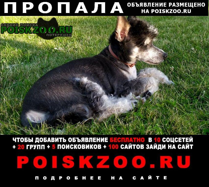 Борисов Пропала собака кобель