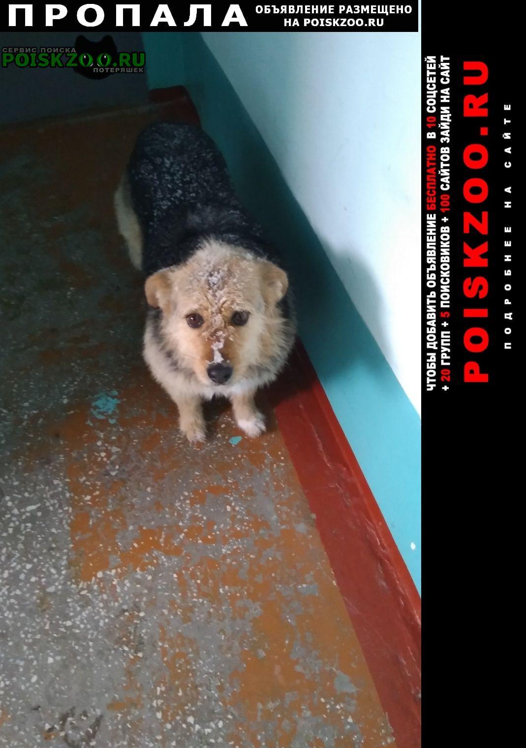 Пропала собака Омск