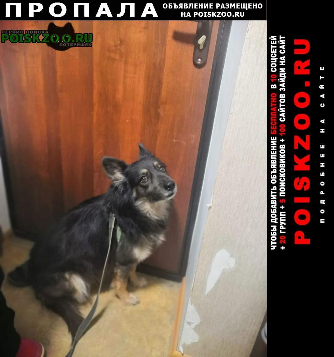 Дубовка (Волгоградская обл.) Пропала собака