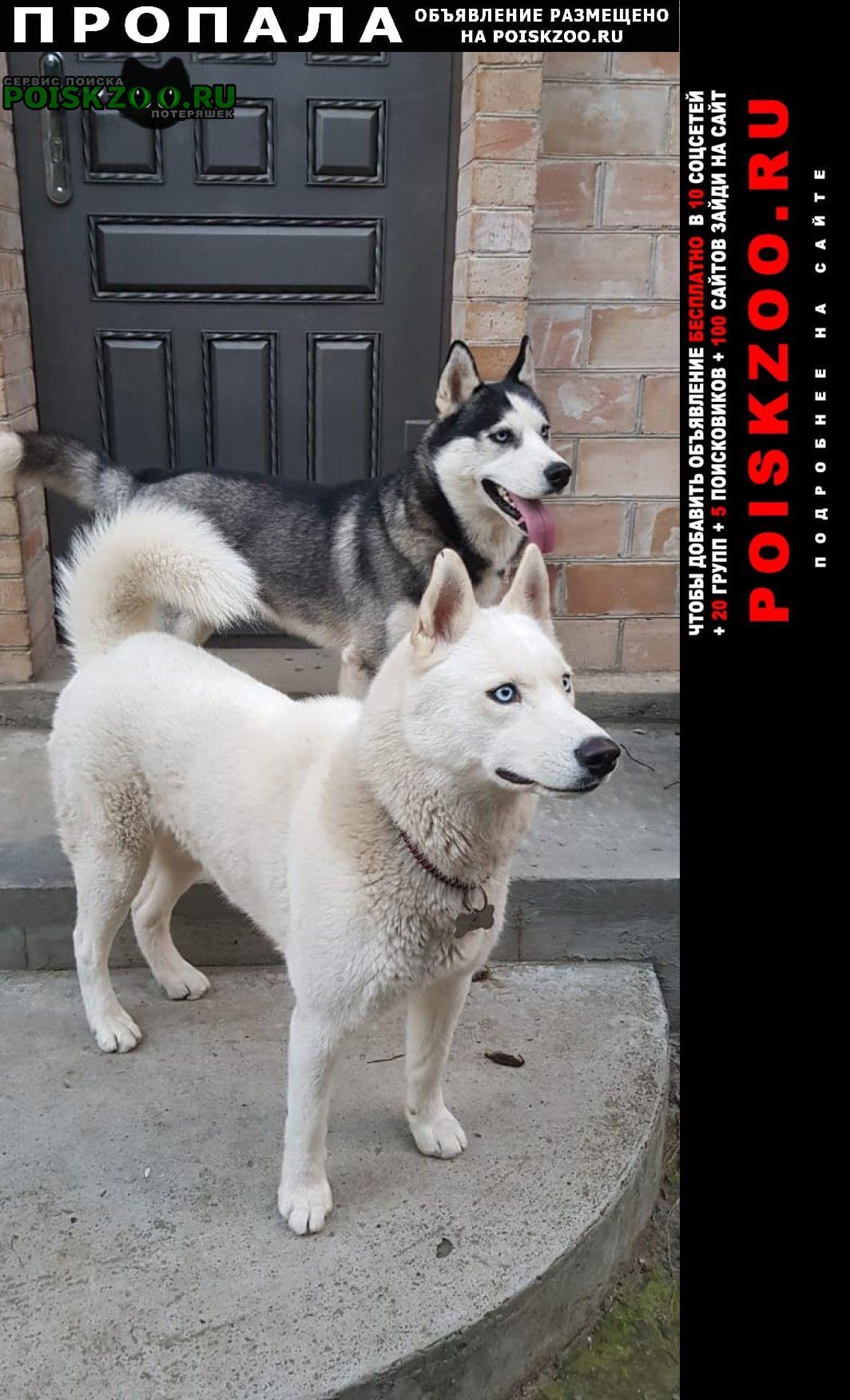 Пропала собака кобель пара собак Кисловодск