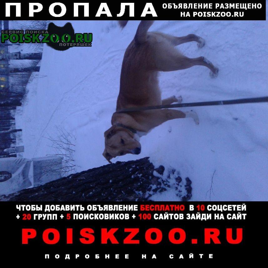 Заречный (Пензенская обл.) Пропала собака кобель 17. 03.21. фото 2020года