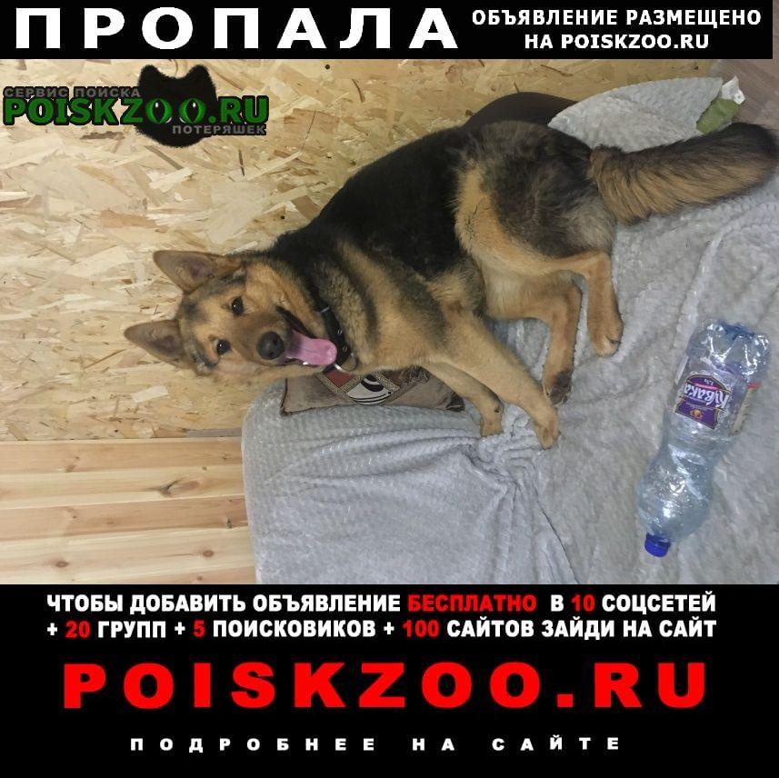 Пенза Пропала собака кобель