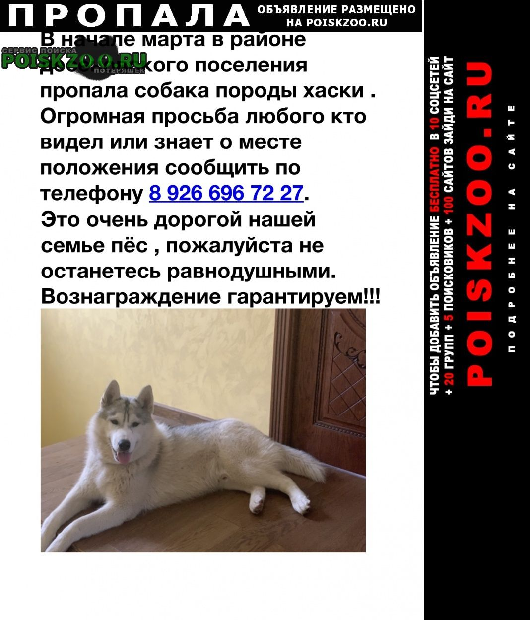 Пропала собака кобель породы хаски Троицк