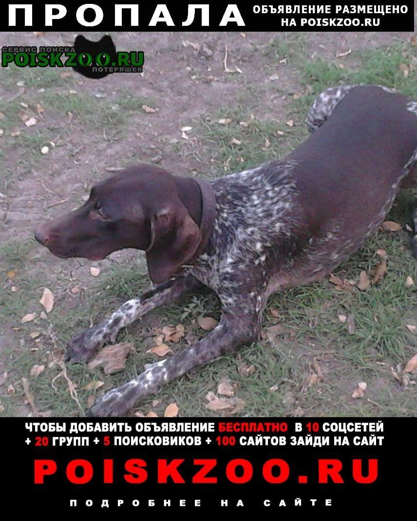 Пропала собака курцхаар Астрахань