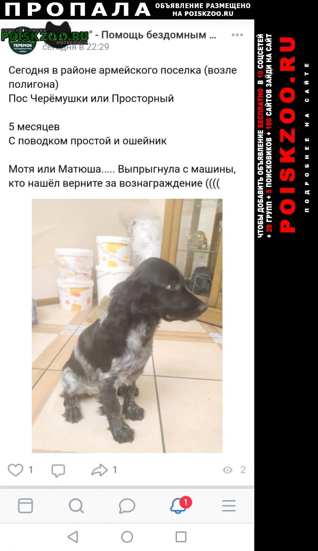 Пропала собака очень важно Омск