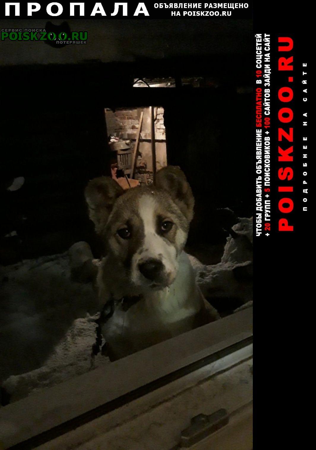 Пропала собака прошу помощи в поиске Кемерово