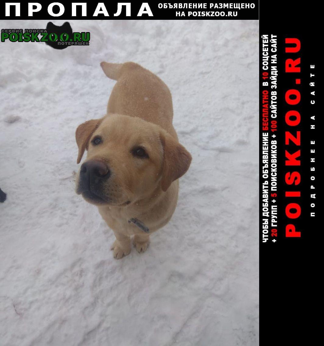 Майкоп (Адыгея) Пропала собака кобель бари