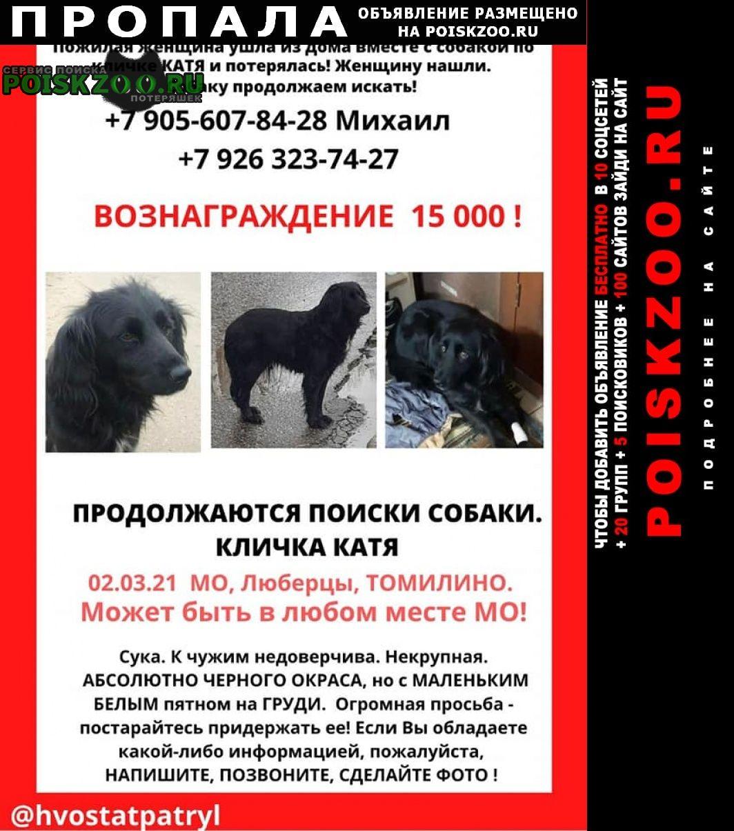 Пропала собака девочка, метис спаниеля Люберцы