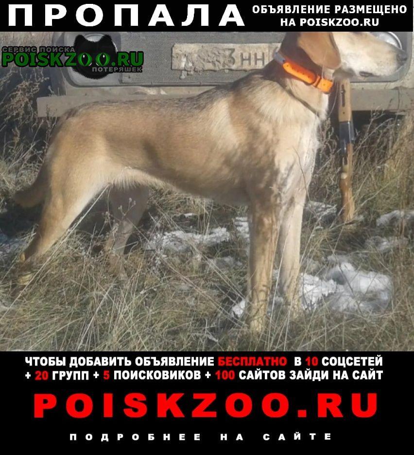 Воскресенское (Саратовск.) Пропала собака русская гончая (выжловка) сука