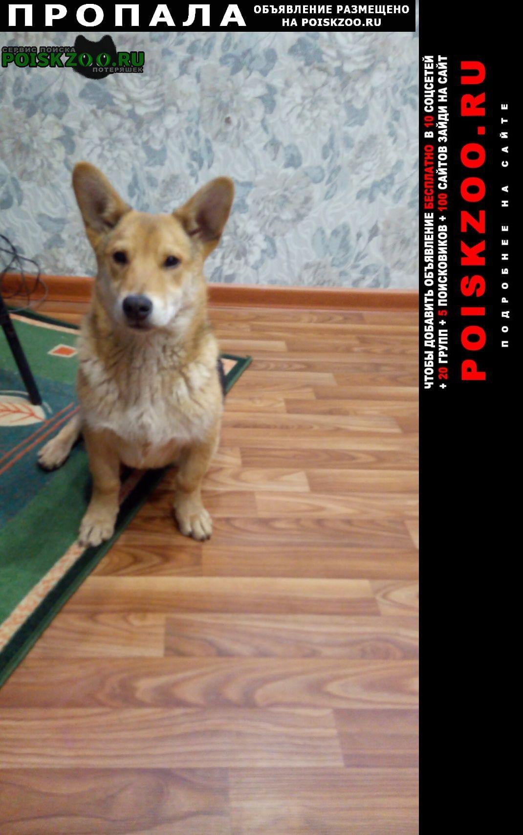 Липецк Пропала собака кобель срочно помогите
