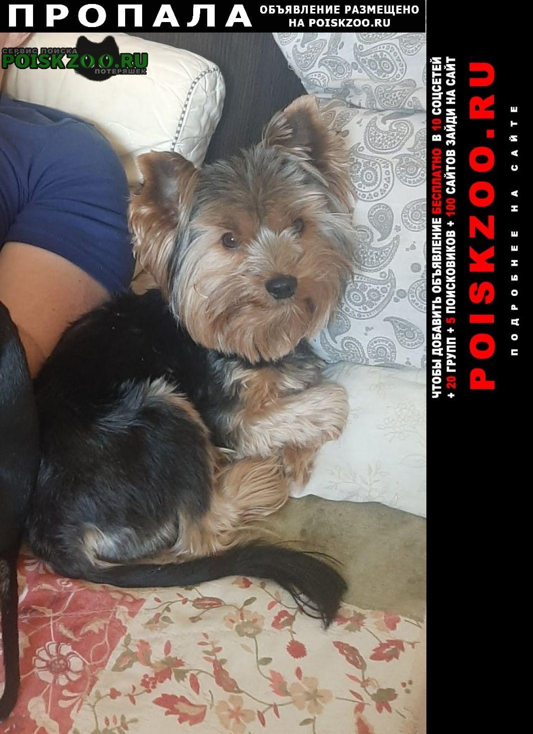 Пропала собака кобель Динская