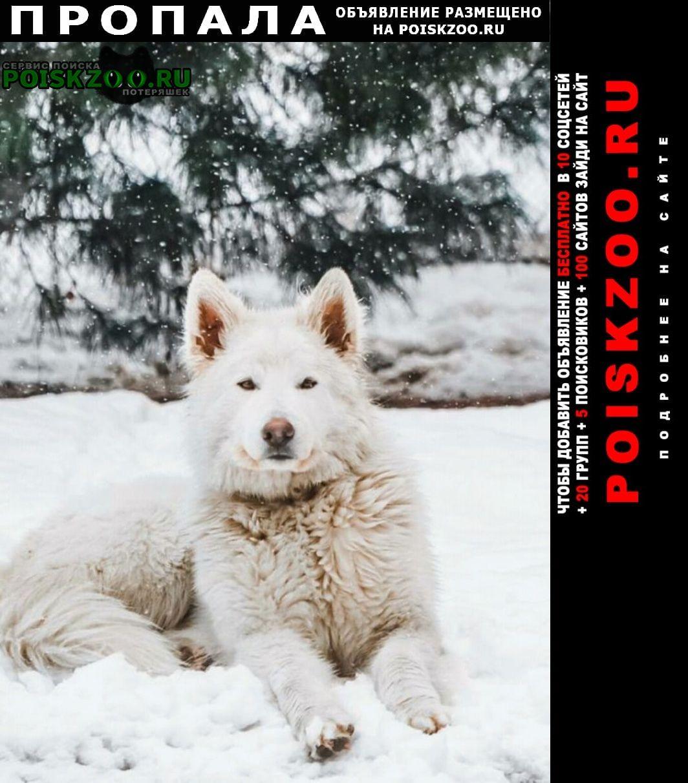 Березовский (Свердловская обл.) Пропала собака кобель