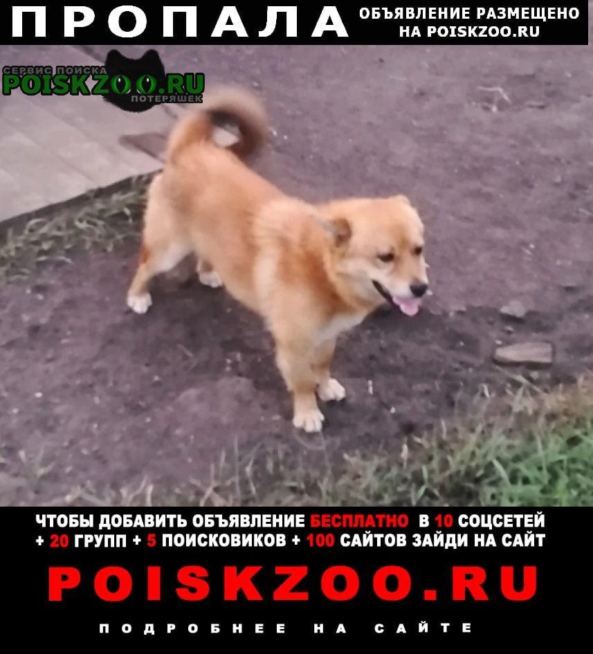 Пропала собака кобель Грязи
