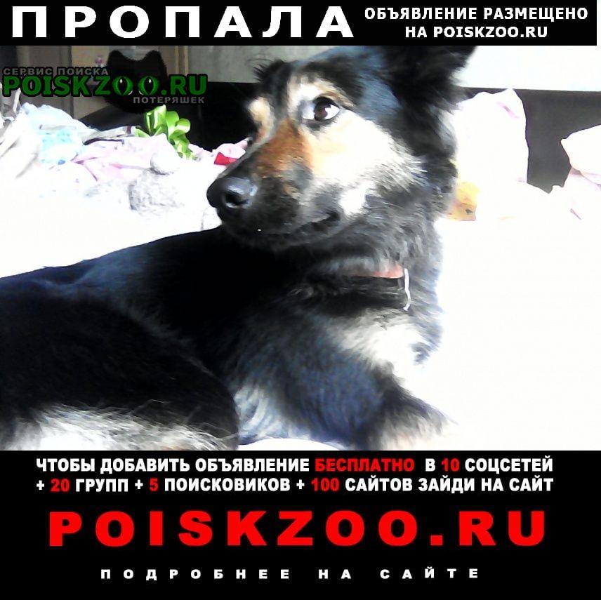 Москва Пропала собака девочка вита