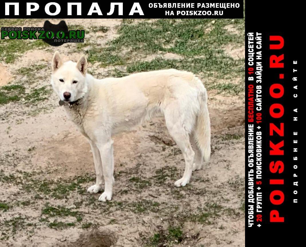 Щербинка Пропала собака чеховский район, деревня прохорово