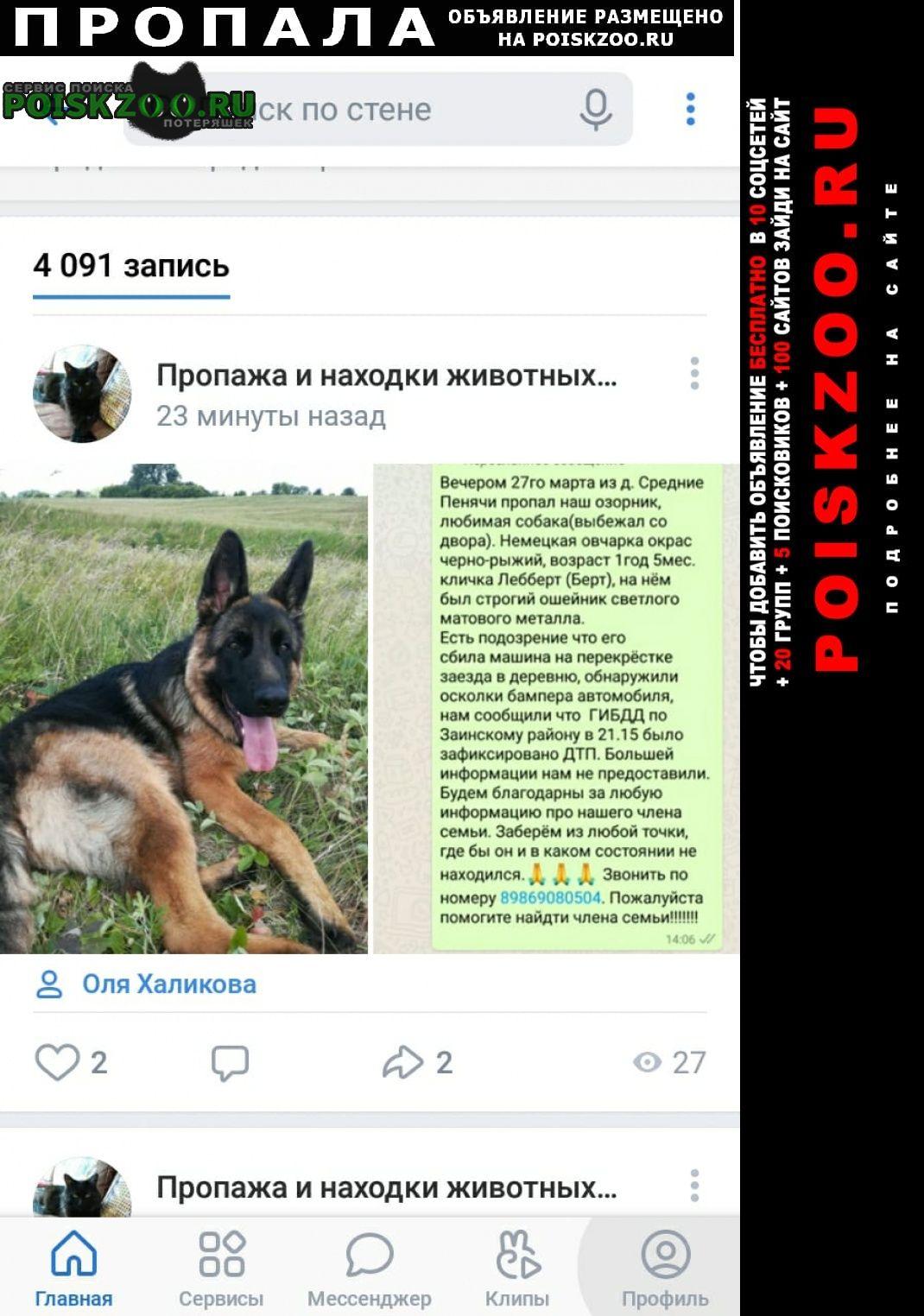 Пропала собака кобель овчарка 1 год Заинск