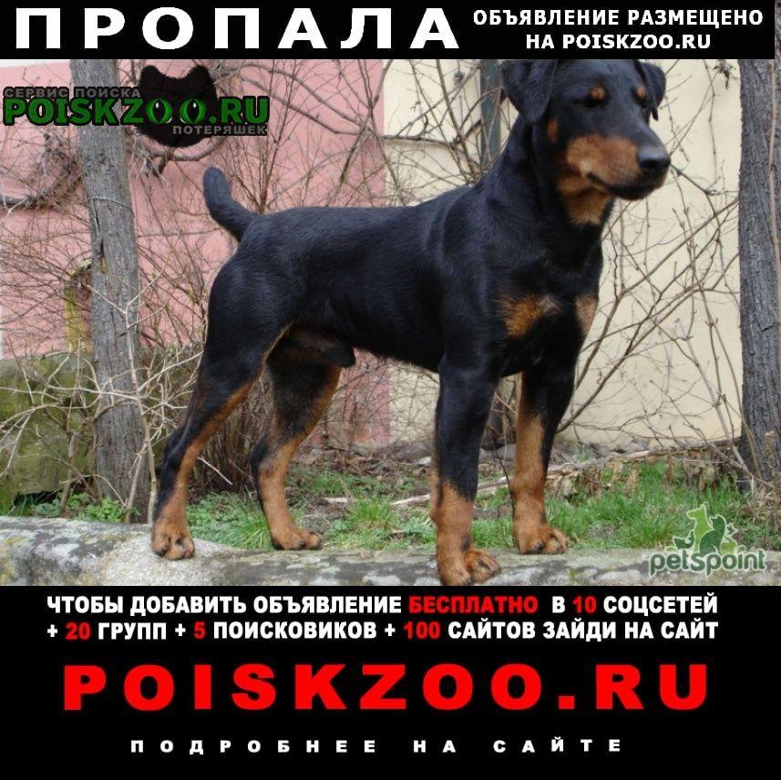 Пропала собака кобель Комсомольск-на-Амуре