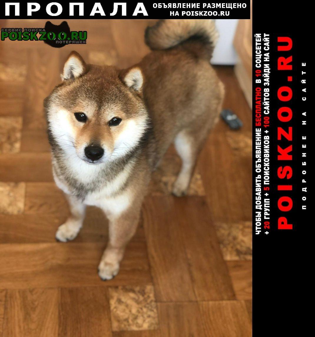 Пропала собака кобель Серпухов